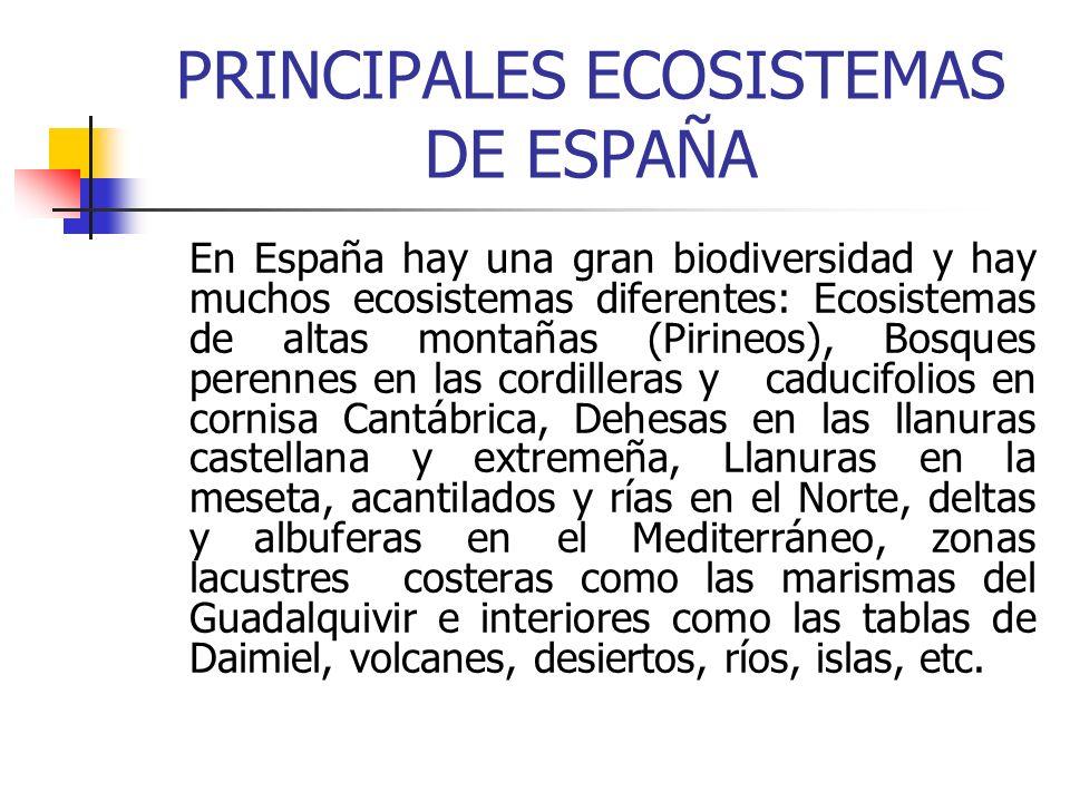 PRINCIPALES ECOSISTEMAS DE ESPAÑA En España hay una gran biodiversidad y hay muchos ecosistemas diferentes: Ecosistemas de altas montañas (Pirineos),