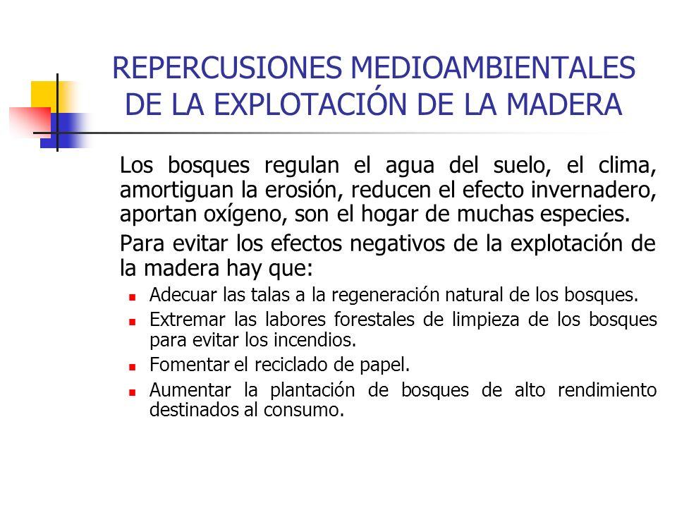 REPERCUSIONES MEDIOAMBIENTALES DE LA EXPLOTACIÓN DE LA MADERA Los bosques regulan el agua del suelo, el clima, amortiguan la erosión, reducen el efect