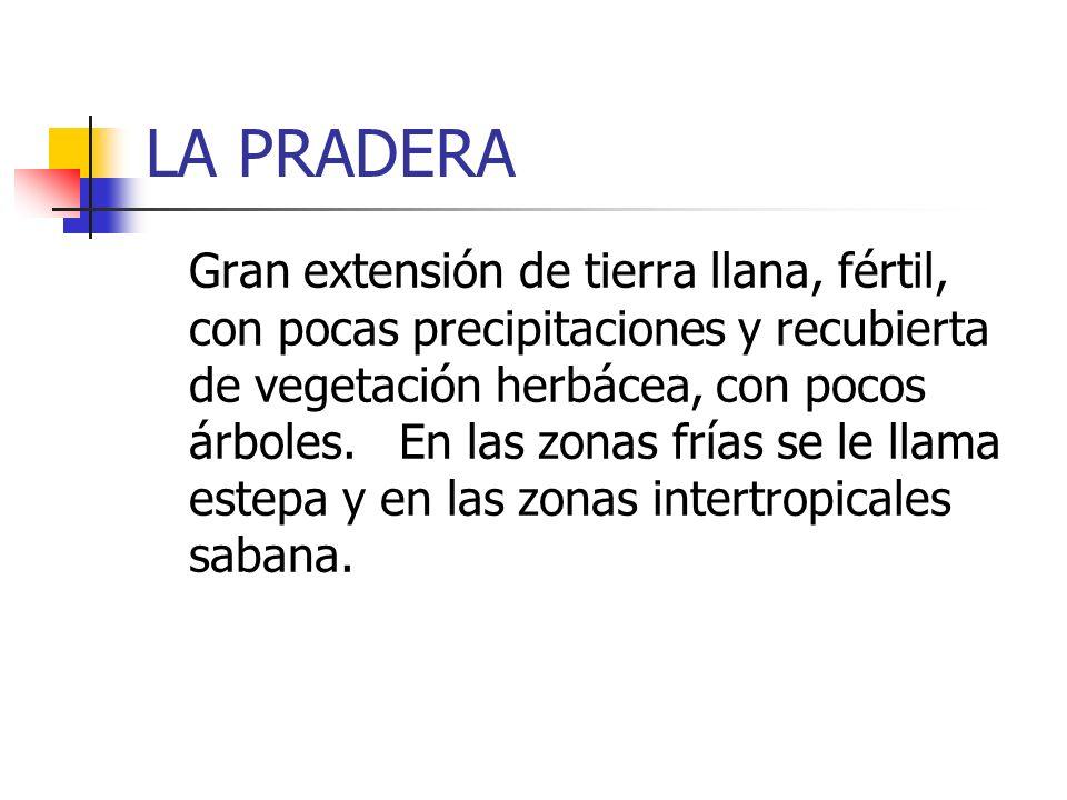 LA PRADERA Gran extensión de tierra llana, fértil, con pocas precipitaciones y recubierta de vegetación herbácea, con pocos árboles. En las zonas fría