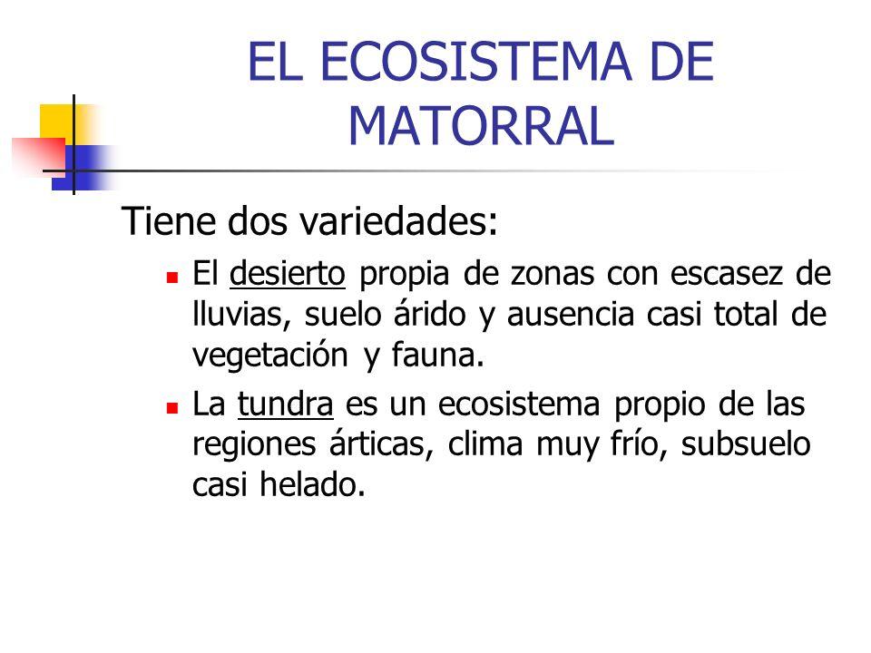 EL ECOSISTEMA DE MATORRAL Tiene dos variedades: El desierto propia de zonas con escasez de lluvias, suelo árido y ausencia casi total de vegetación y