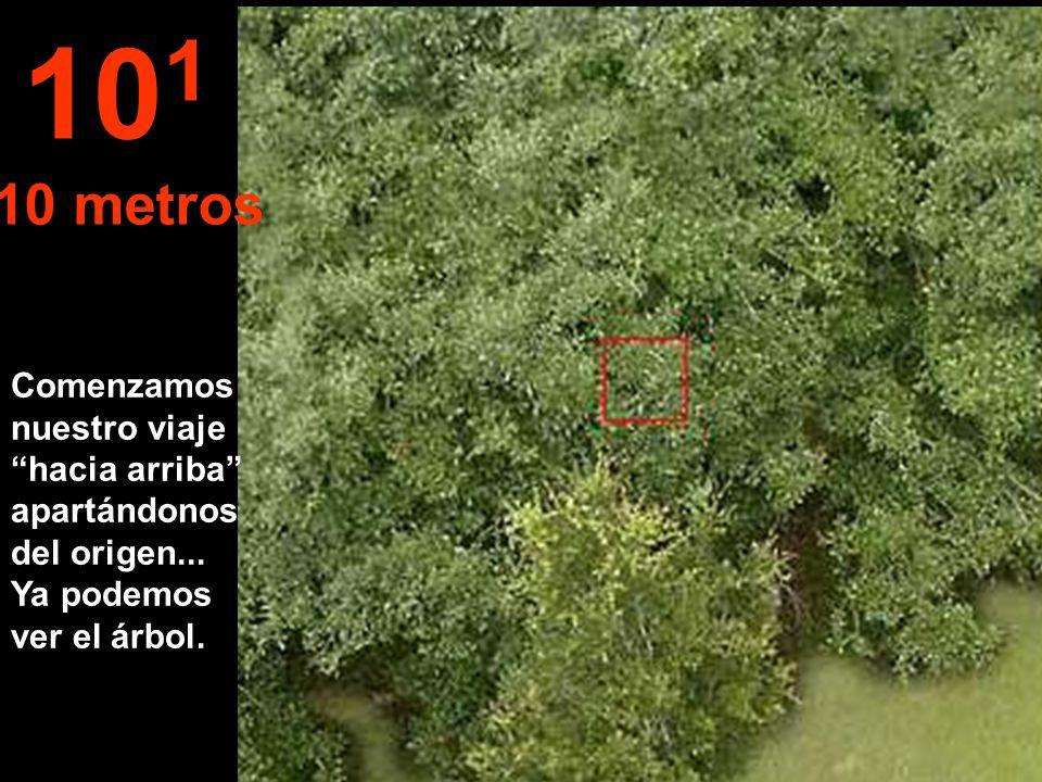 Comenzamos nuestro viaje hacia arriba apartándonos del origen... Ya podemos ver el árbol. 10 1 10 metros