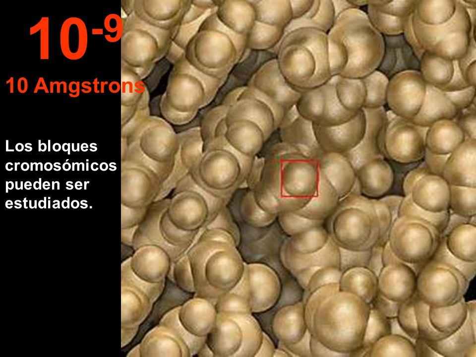 Los bloques cromosómicos pueden ser estudiados. 10 -9 10 Amgstrons