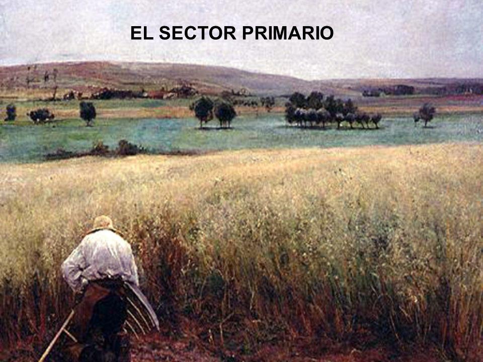 El sector primario o agrario está formado por las actividades económicas relacionadas con la transformación de los recursos naturales en productos primarios no elaborados.