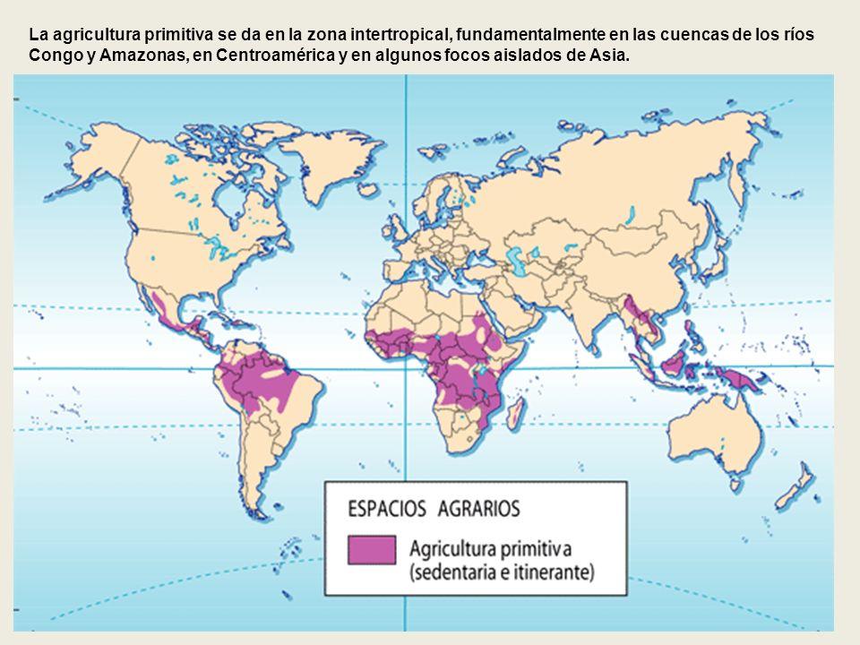 La agricultura primitiva se da en la zona intertropical, fundamentalmente en las cuencas de los ríos Congo y Amazonas, en Centroamérica y en algunos f