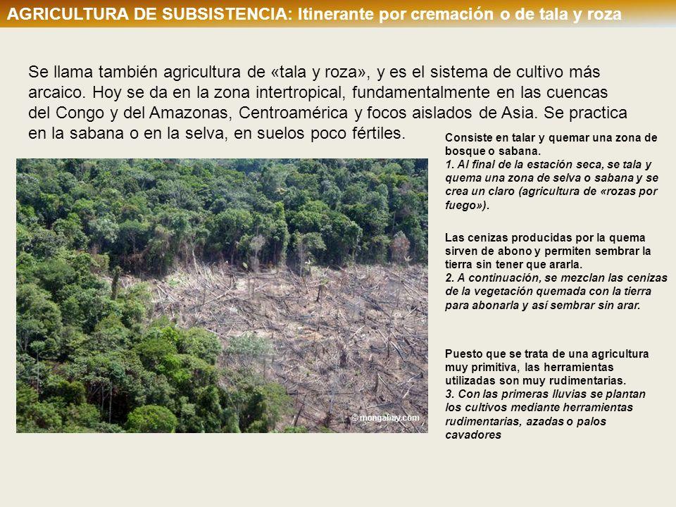 AGRICULTURA DE SUBSISTENCIA: Itinerante por cremación o de tala y roza Se llama también agricultura de «tala y roza», y es el sistema de cultivo más a