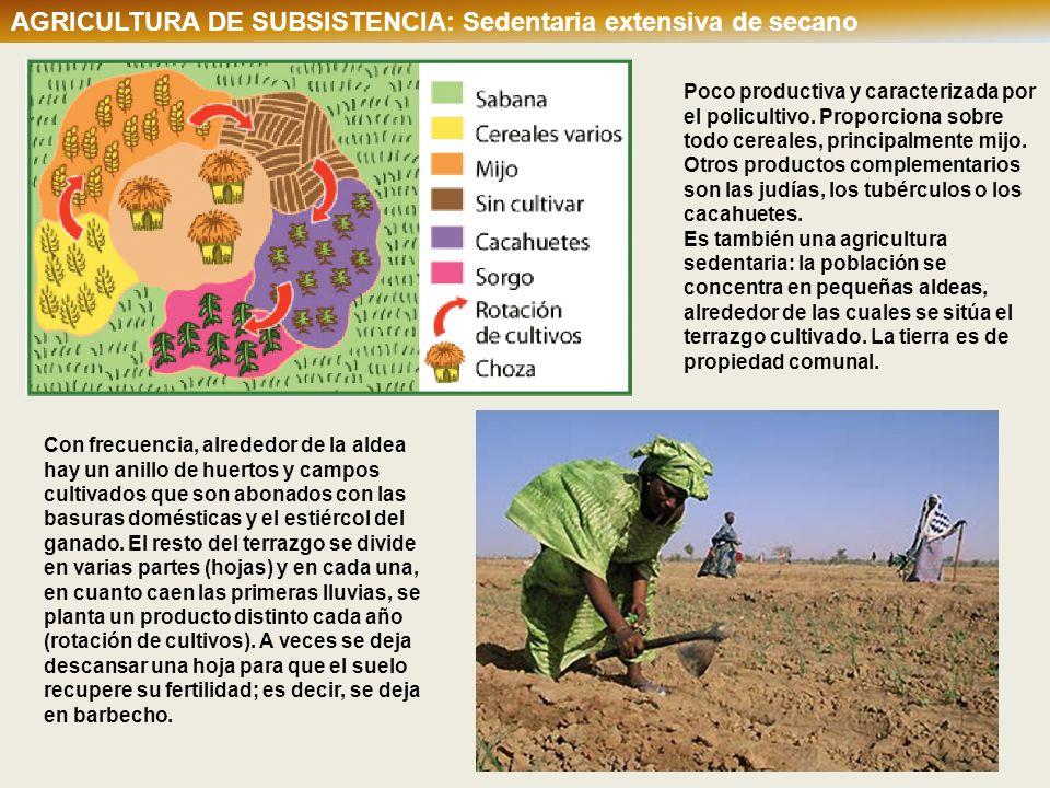 AGRICULTURA DE SUBSISTENCIA: Sedentaria extensiva de secano Poco productiva y caracterizada por el policultivo. Proporciona sobre todo cereales, princ