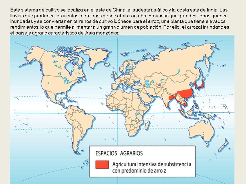 Este sistema de cultivo se localiza en el este de China, el sudeste asiático y la costa este de India. Las lluvias que producen los vientos monzones d