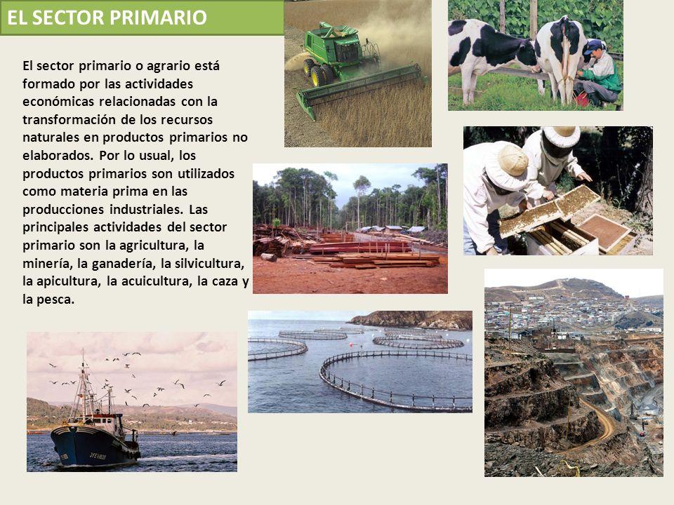 El sector primario o agrario está formado por las actividades económicas relacionadas con la transformación de los recursos naturales en productos pri