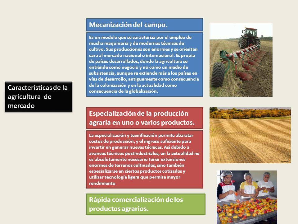 Rápida comercialización de los productos agrarios. Es un modelo que se caracteriza por el empleo de mucha maquinaria y de modernas técnicas de cultivo