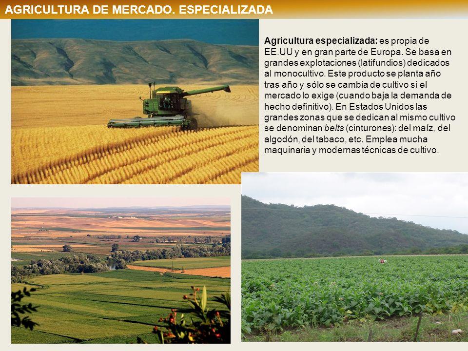 Agricultura especializada: es propia de EE.UU y en gran parte de Europa. Se basa en grandes explotaciones (latifundios) dedicados al monocultivo. Este
