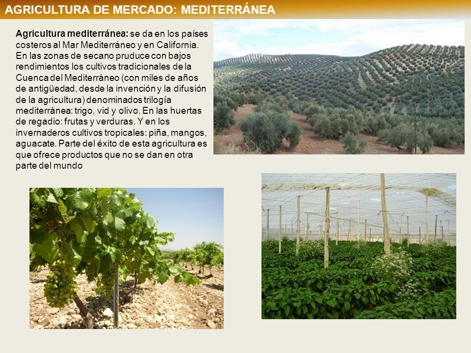 Agricultura mediterránea: se da en los países costeros al Mar Mediterráneo y en California. En las zonas de secano pruduce con bajos rendimientos los
