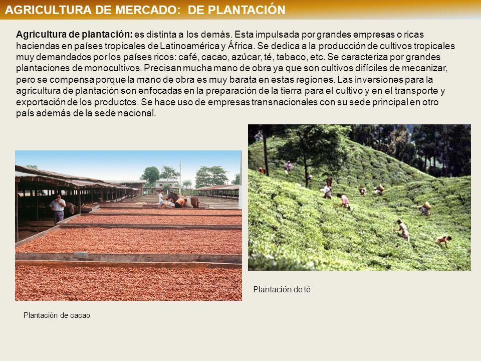 Agricultura de plantación: es distinta a los demás. Esta impulsada por grandes empresas o ricas haciendas en países tropicales de Latinoamérica y Áfri