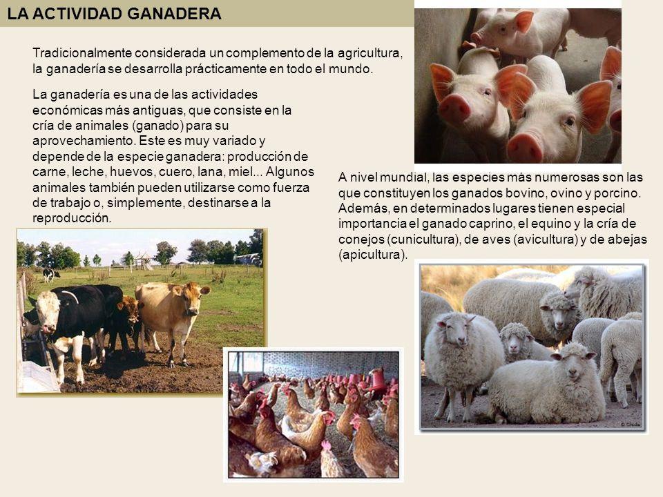 Tradicionalmente considerada un complemento de la agricultura, la ganadería se desarrolla prácticamente en todo el mundo. La ganadería es una de las a