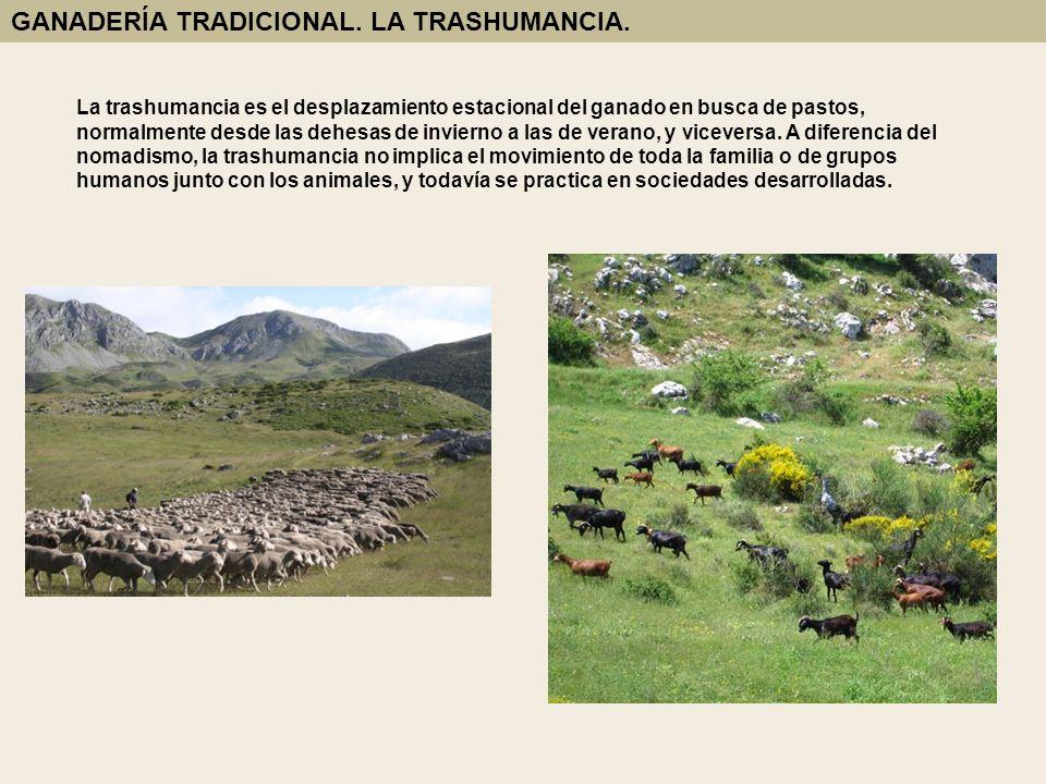 La trashumancia es el desplazamiento estacional del ganado en busca de pastos, normalmente desde las dehesas de invierno a las de verano, y viceversa.