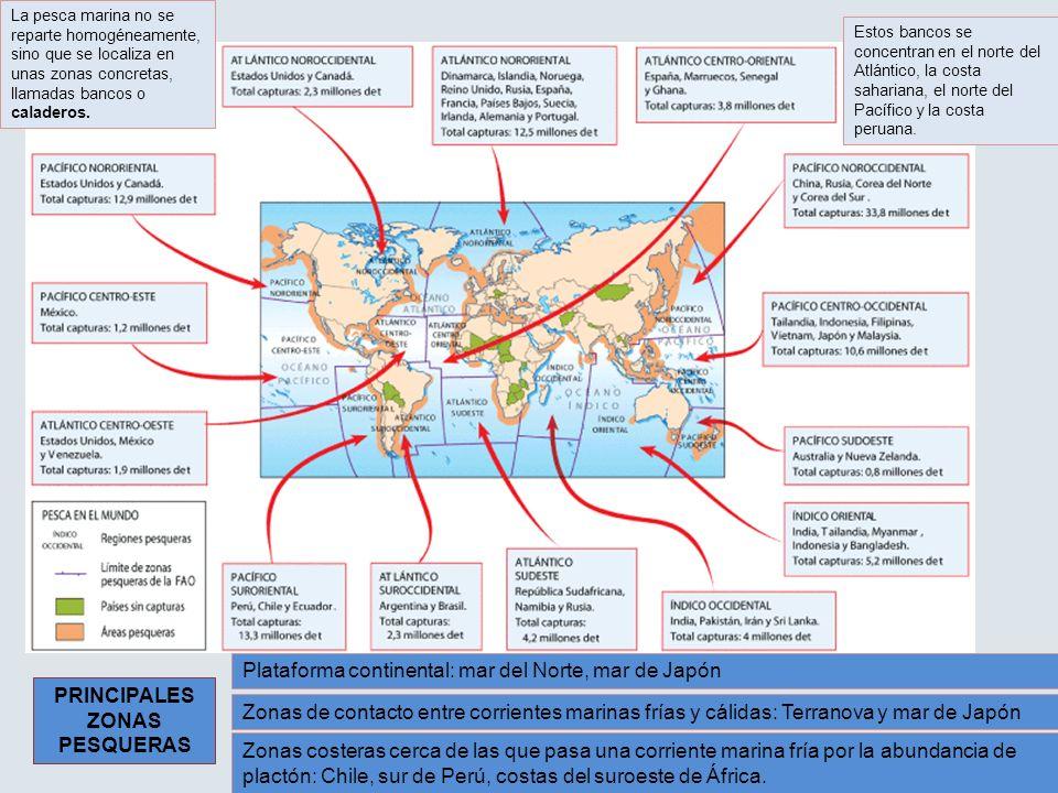 Plataforma continental: mar del Norte, mar de Japón Zonas de contacto entre corrientes marinas frías y cálidas: Terranova y mar de Japón Zonas costera