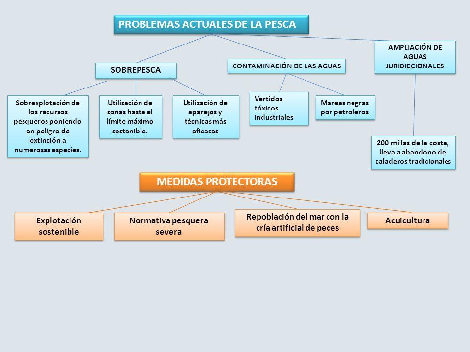 PROBLEMAS ACTUALES DE LA PESCA SOBREPESCA Sobrexplotación de los recursos pesqueros poniendo en peligro de extinción a numerosas especies. Utilización