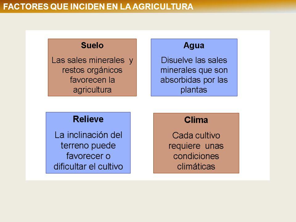 TIPOS DE AGRICULTURA Según las parcelas: Bocage o campos cerrados Openfields o campos abiertos TIPOS DE AGRICULTURA