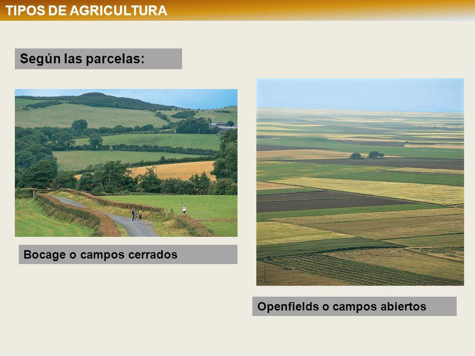 Sin embargo, como la densidad de población es muy elevada, es necesario cultivar la totalidad de la tierra disponible.