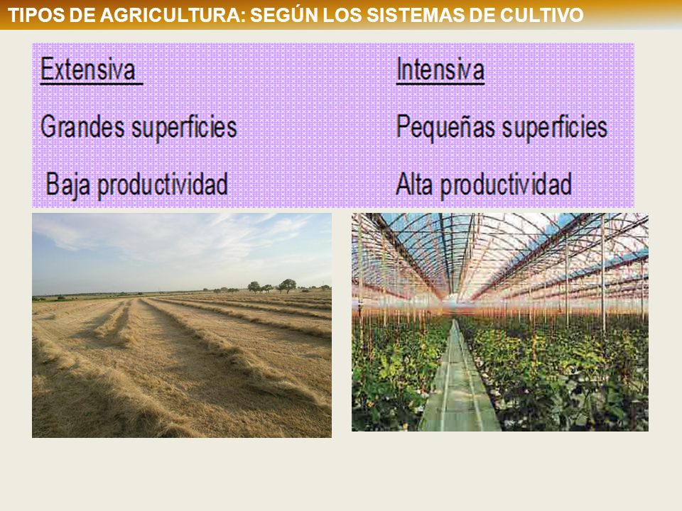 TIPOS DE AGRICULTURA: Según los sistemas de cultivo TIPOS DE AGRICULTURA: SEGÚN LOS SISTEMAS DE CULTIVO