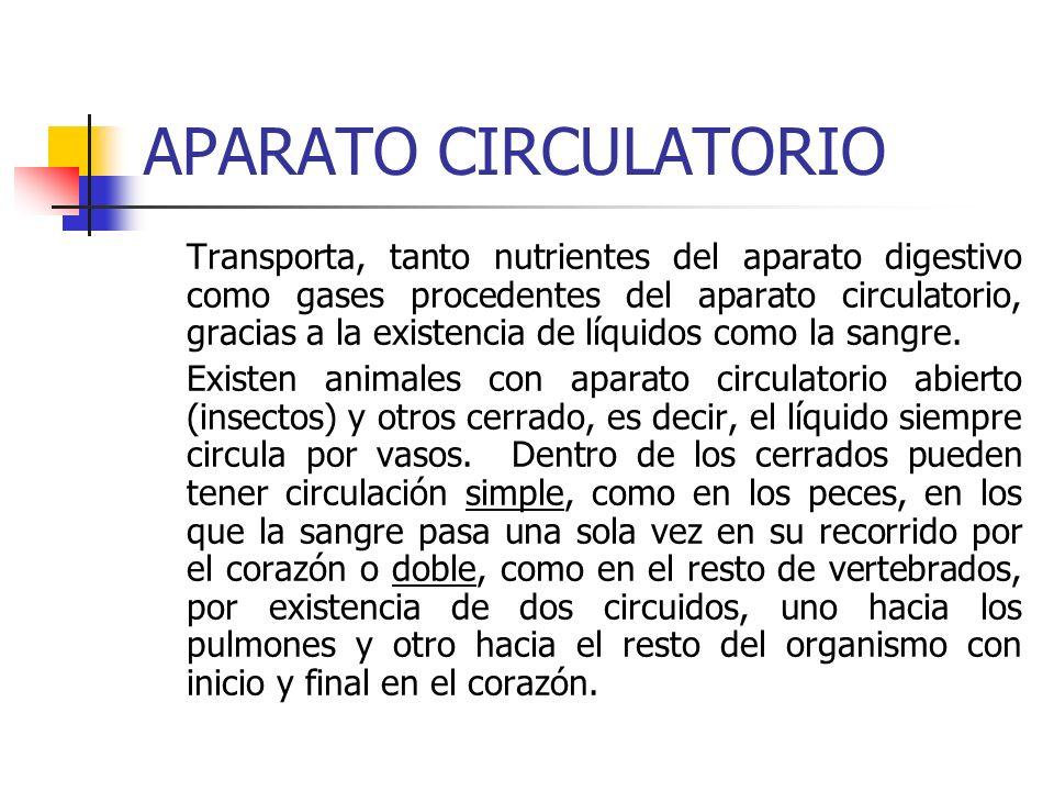 APARATO CIRCULATORIO Transporta, tanto nutrientes del aparato digestivo como gases procedentes del aparato circulatorio, gracias a la existencia de lí