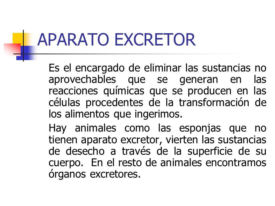 APARATO EXCRETOR Es el encargado de eliminar las sustancias no aprovechables que se generan en las reacciones químicas que se producen en las células