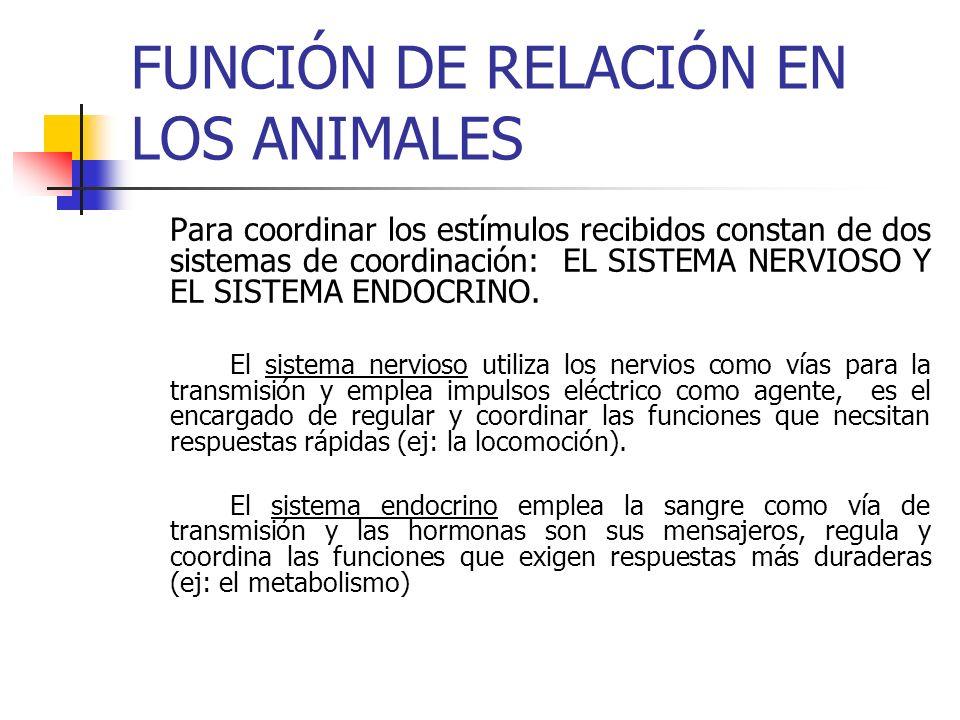 FUNCIÓN DE RELACIÓN EN LOS ANIMALES Para coordinar los estímulos recibidos constan de dos sistemas de coordinación: EL SISTEMA NERVIOSO Y EL SISTEMA E