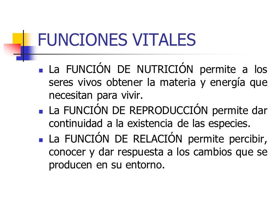 FUNCIONES VITALES La FUNCIÓN DE NUTRICIÓN permite a los seres vivos obtener la materia y energía que necesitan para vivir. La FUNCIÓN DE REPRODUCCIÓN