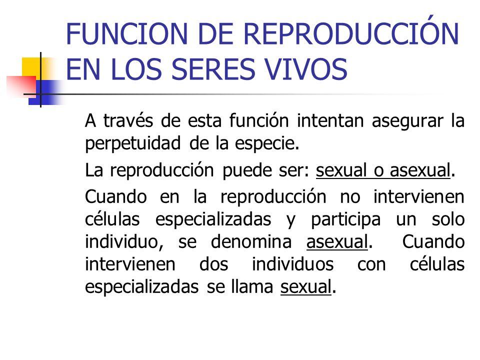 FUNCION DE REPRODUCCIÓN EN LOS SERES VIVOS A través de esta función intentan asegurar la perpetuidad de la especie. La reproducción puede ser: sexual
