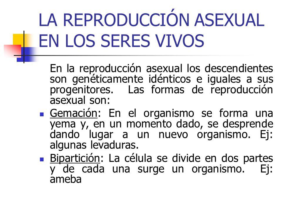 LA REPRODUCCIÓN ASEXUAL EN LOS SERES VIVOS En la reproducción asexual los descendientes son genéticamente idénticos e iguales a sus progenitores. Las