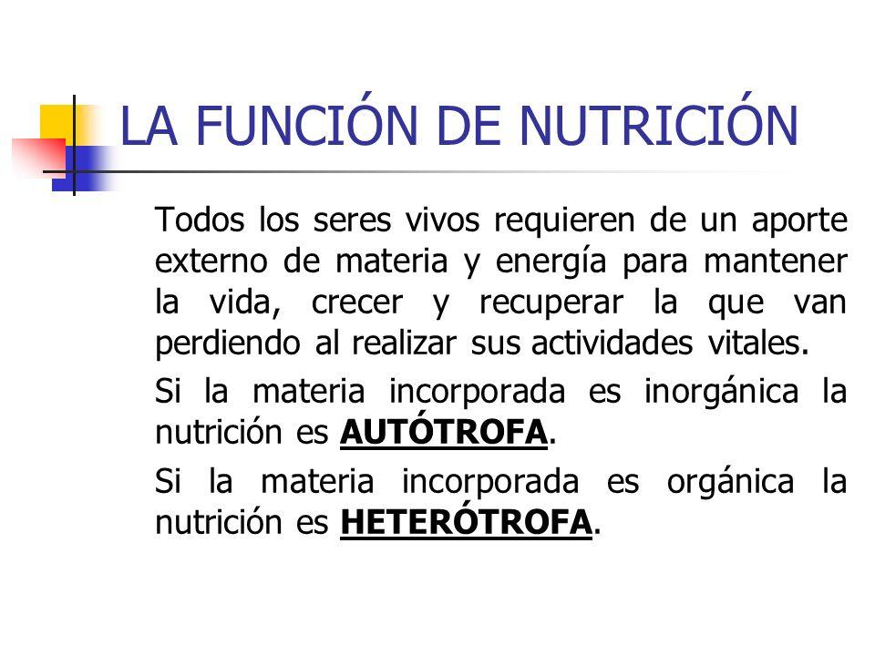 LA FUNCIÓN DE NUTRICIÓN Todos los seres vivos requieren de un aporte externo de materia y energía para mantener la vida, crecer y recuperar la que van