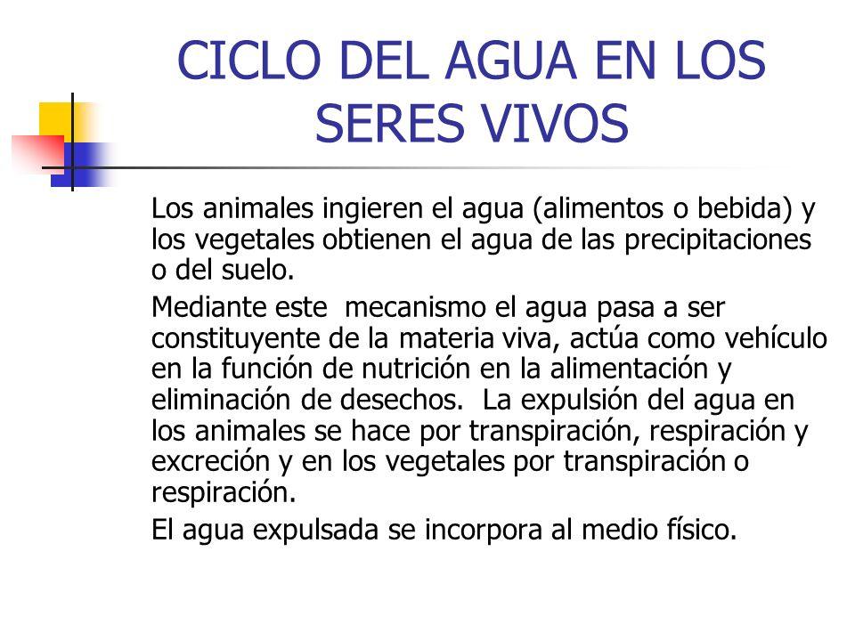 CICLO DEL AGUA EN LOS SERES VIVOS Los animales ingieren el agua (alimentos o bebida) y los vegetales obtienen el agua de las precipitaciones o del sue