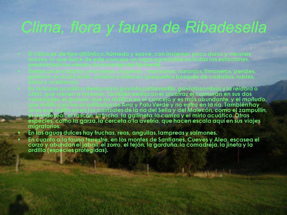 Clima, flora y fauna de Ribadesella El clima es de tipo atlántico, húmedo y suave, con inviernos poco duros y veranos suaves, lo que hace de este conc