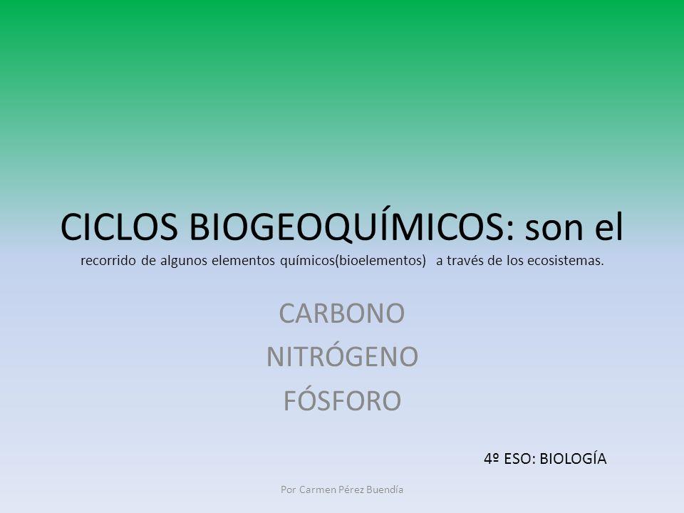 CICLOS BIOGEOQUÍMICOS: son el recorrido de algunos elementos químicos(bioelementos) a través de los ecosistemas. CARBONO NITRÓGENO FÓSFORO Por Carmen