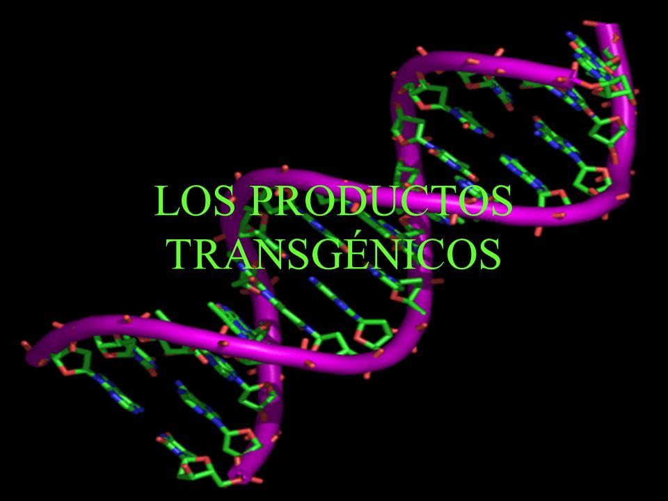 PRODUCTOS TRANSGÉNICOS ¿Qué son.