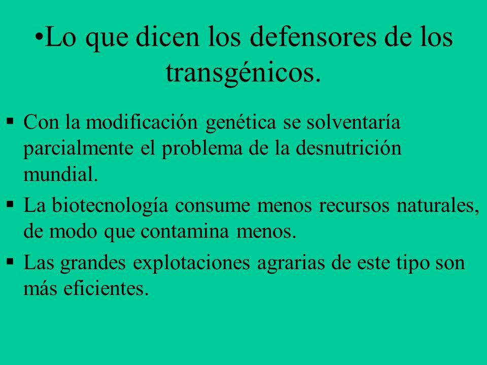 Lo que dicen los defensores de los transgénicos. Con la modificación genética se solventaría parcialmente el problema de la desnutrición mundial. La b
