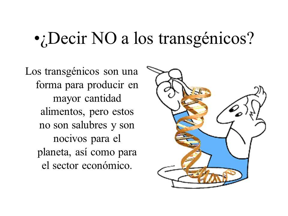 ¿Decir NO a los transgénicos? Los transgénicos son una forma para producir en mayor cantidad alimentos, pero estos no son salubres y son nocivos para