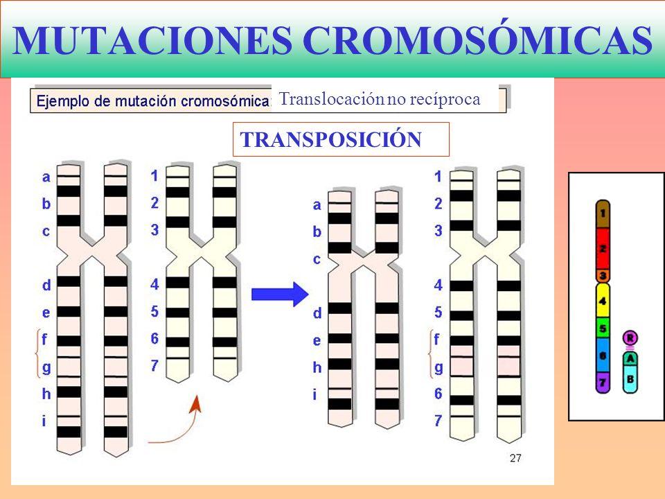 mutaciones del cromosoma 18: