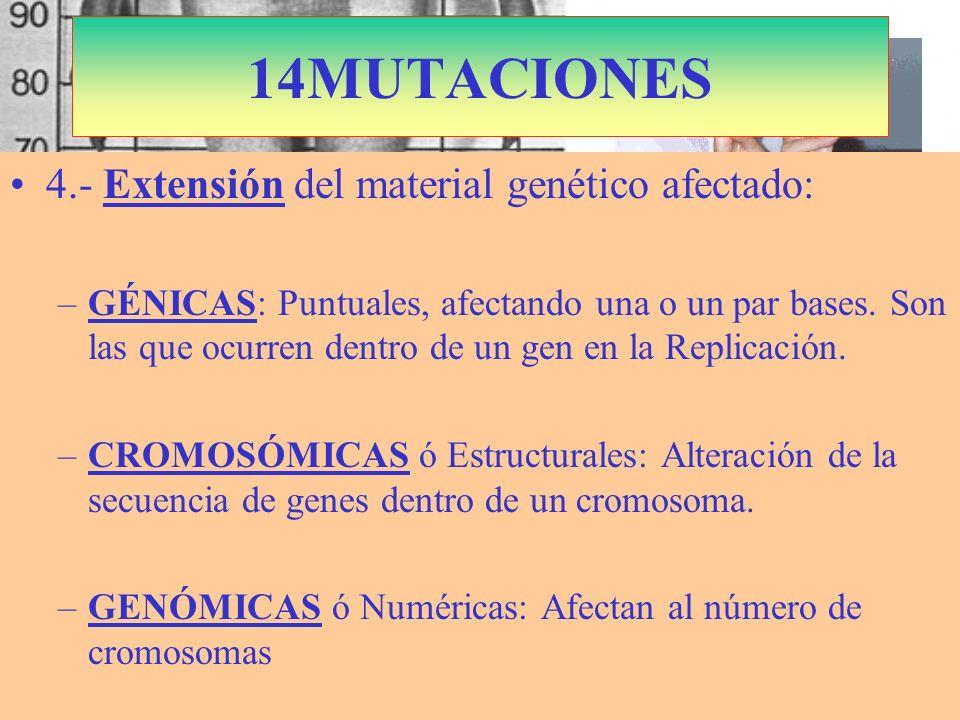 S. Marfán: Cromosoma 15 Dominante Fibrilina 14MUTACIONES 4.- Extensión del material genético afectado: –GÉNICAS: Puntuales, afectando una o un par bas