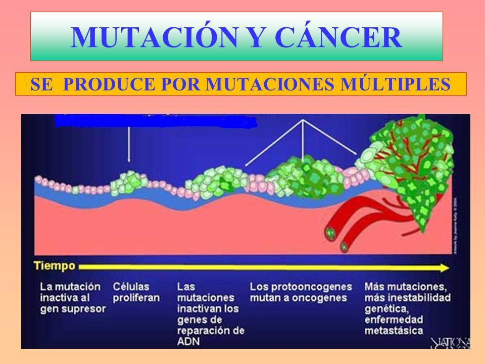 MUTACIÓN Y CÁNCER SE PRODUCE POR MUTACIONES MÚLTIPLES