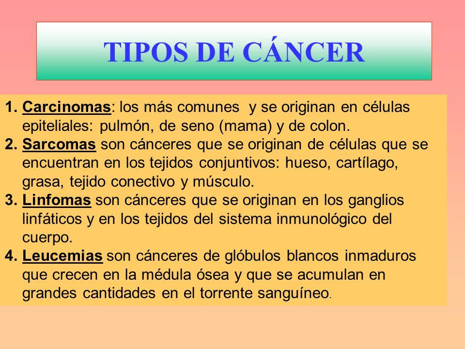 TIPOS DE CÁNCER 1.Carcinomas: los más comunes y se originan en células epiteliales: pulmón, de seno (mama) y de colon. 2.Sarcomas son cánceres que se
