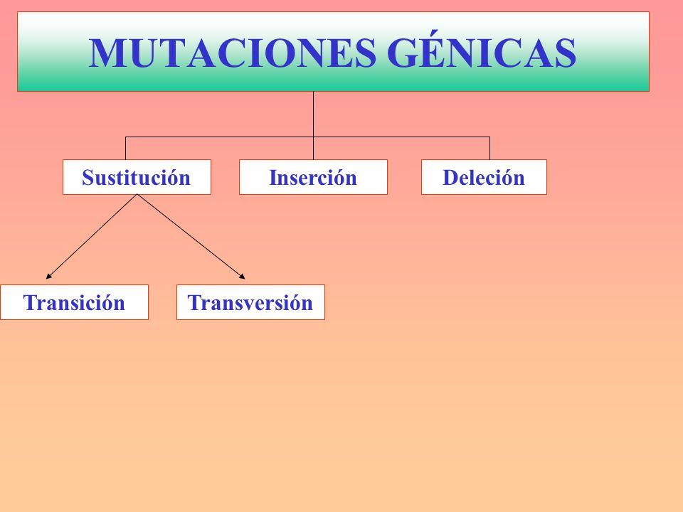 InserciónDeleción TransversiónTransición Sustitución MUTACIONES GÉNICAS