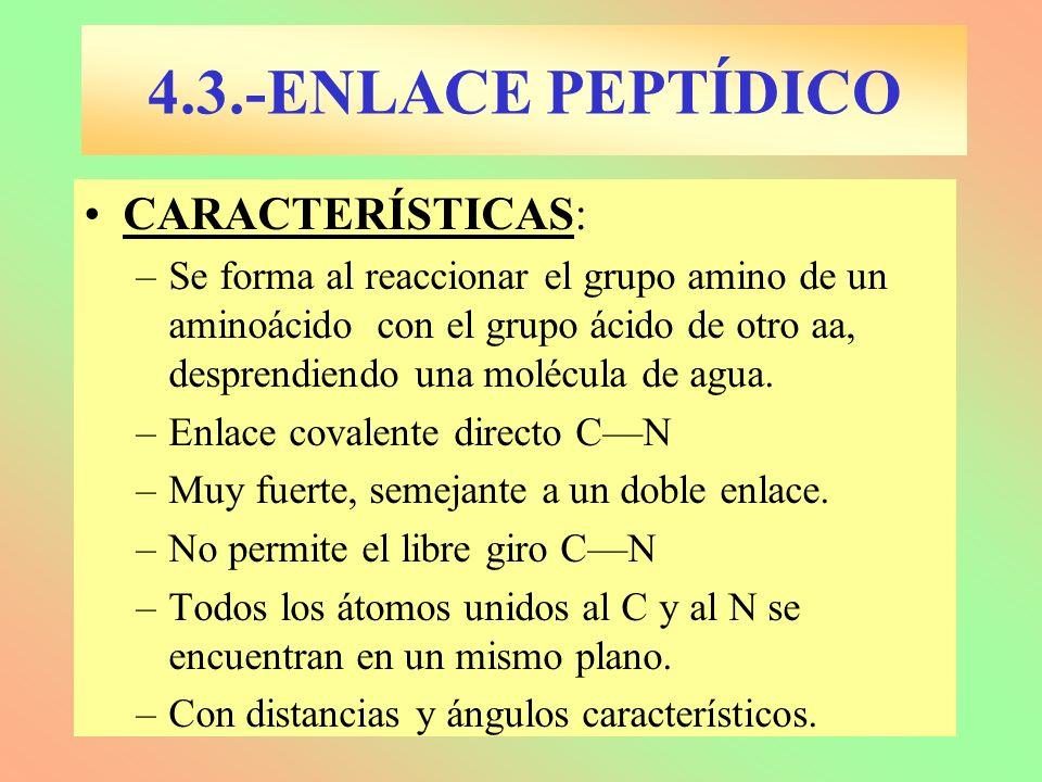 CARACTERÍSTICAS: –Se forma al reaccionar el grupo amino de un aminoácido con el grupo ácido de otro aa, desprendiendo una molécula de agua. –Enlace co