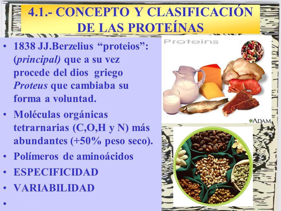 4.1.- CONCEPTO Y CLASIFICACIÓN DE LAS PROTEÍNAS 1838 JJ.Berzelius proteios: (principal) que a su vez procede del dios griego Proteus que cambiaba su f