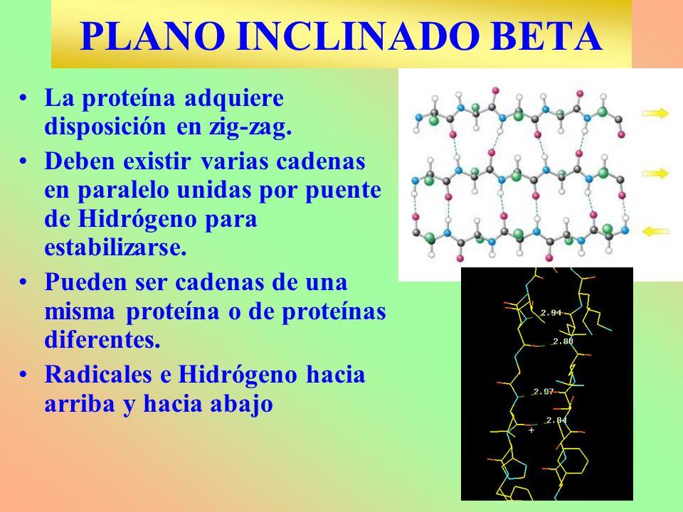 PLANO INCLINADO BETA La proteína adquiere disposición en zig-zag. Deben existir varias cadenas en paralelo unidas por puente de Hidrógeno para estabil
