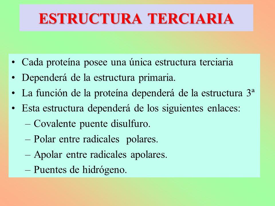 Cada proteína posee una única estructura terciaria Dependerá de la estructura primaria. La función de la proteína dependerá de la estructura 3ª Esta e