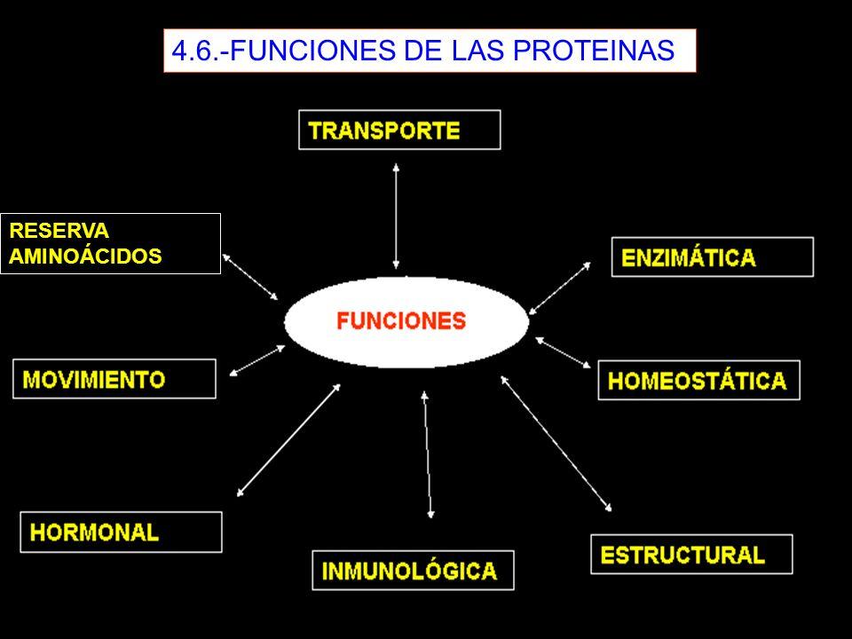 4.6.-FUNCIONES DE LAS PROTEINAS RESERVA AMINOÁCIDOS