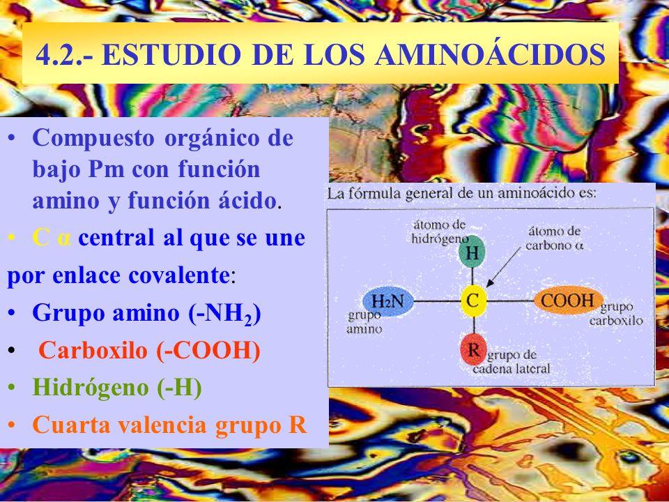 4.2.- ESTUDIO DE LOS AMINOÁCIDOS Arginina al microscopio Compuesto orgánico de bajo Pm con función amino y función ácido. C α central al que se une po