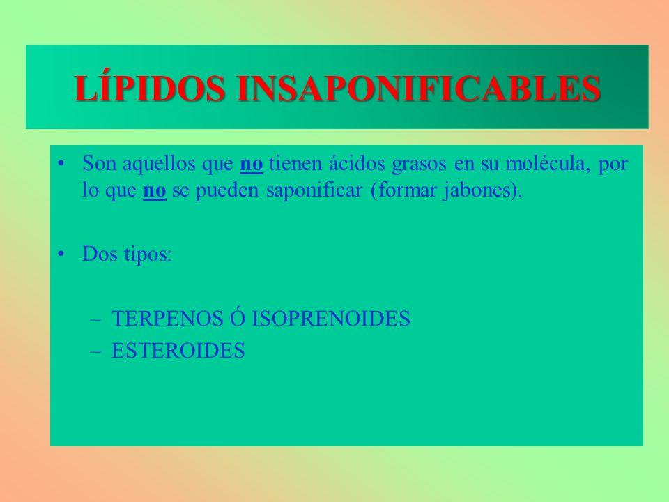 LÍPIDOS INSAPONIFICABLES Son aquellos que no tienen ácidos grasos en su molécula, por lo que no se pueden saponificar (formar jabones). Dos tipos: –TE