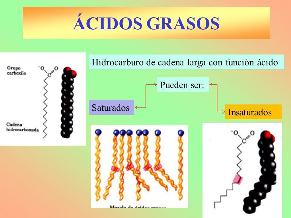 ÁCIDOS GRASOS Hidrocarburo de cadena larga con función ácido Pueden ser: Saturados Insaturados