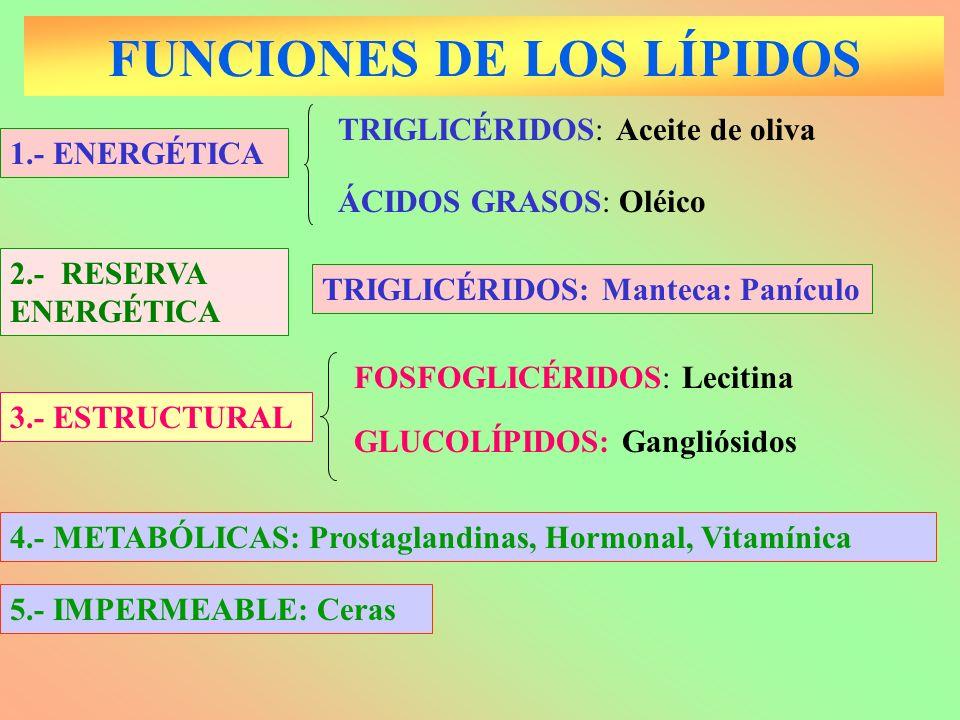 FUNCIONES DE LOS LÍPIDOS 1.- ENERGÉTICA ÁCIDOS GRASOS: Oléico TRIGLICÉRIDOS: Aceite de oliva GLUCOLÍPIDOS: Gangliósidos 3.- ESTRUCTURAL FOSFOGLICÉRIDO